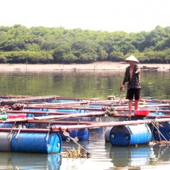 Khúc sông chừng 500m thu hàng tỷ đồng/năm