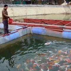 Lãi cao từ mô hình nuôi cá đặc sản