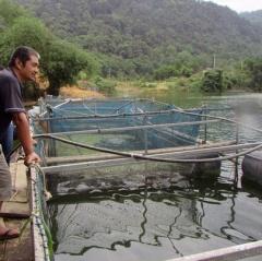 Nuôi vịt, cá sinh thái trên sông Giăng thu trăm triệu mỗi năm
