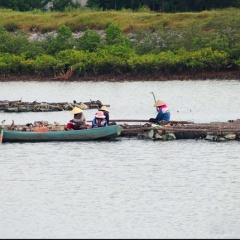 Nuôi hàu ở Nghệ An thất thu vì mất mùa