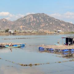 Tín hiệu khả quan trong nuôi trồng thủy sản Ninh Thuận