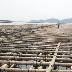 Phát triển nghề nuôi cá lồng bè trên biển tại Quảng Ninh