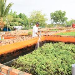 Khởi nghiệp từ nuôi lươn không bùn
