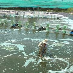 Nông dân Long an chủ động ứng dụng công nghệ cao vào sản xuất