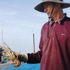 Ninh Thuận: Nâng cao hiệu quả nghề nuôi tôm hùm