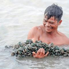 Thu nhập cao từ nuôi sò huyết xen vẹm xanh ven biển