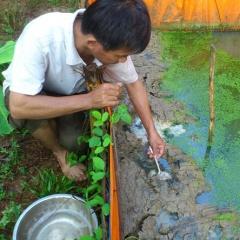 TT - Huế: Sinh sản nhân tạo giống lươn đồng