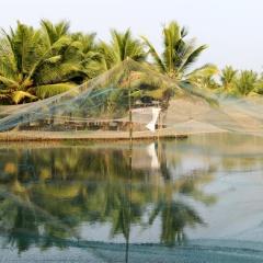 Xuất khẩu thủy sản Ấn Độ tăng 13% bất chấp giá tôm thế giới giảm