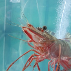 Khoáng chất vi lượng hữu cơ trong nuôi trồng thủy sản