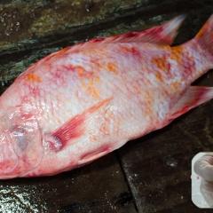 Vỏ quế - thảo dược tiềm năng cho phòng trị bệnh cá diêu hồng