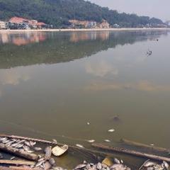 Cá chết hàng loạt tại bốn hồ điều hòa ở Quảng Ninh