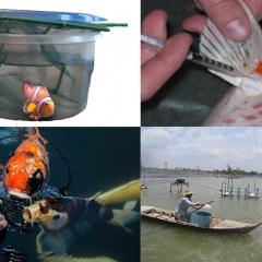 Những lưu ý khi sử dụng hóa chất trong nuôi trồng thủy sản