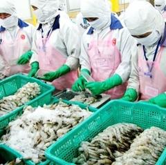 Xuất khẩu tôm Việt Nam: 20 năm nhìn lại