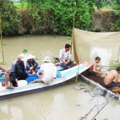 Đồng Tháp: Cấm đánh bắt cá trong mùa sinh sản