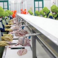 Thuỷ sản Hùng Vương báo lỗ 272 tỷ, cổ phiếu rẻ hơn trà đá