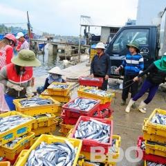 Hoài Nhơn: Sản lượng khai thác hải sản ước trên 25.500 tấn