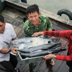 Hà Tĩnh: Sản lượng khai thác 5 tháng hơn 12.000 tấn