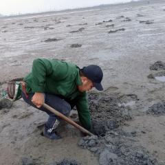 """""""Nhùng nhằng"""" chuyện bãi triều ở Phú Hải"""