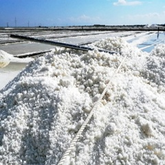 Nghề làm muối ở đồng muối hơn 100 tuổi Cà Ná