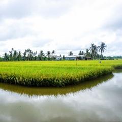 Mô hình luân canh lúa-tôm giúp nông dân vượt khó