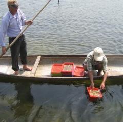"""Nuôi chung """"sú, đối, cua, kình"""" mô hình thủy sản bền vững"""