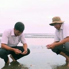 Kết quả quan trắc môi trường thủy sản và nguyên nhân nghêu chết ở Trà Vinh