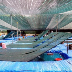 Chọn 4 cơ sở sản xuất cá cảnh xây dựng mô hình thực hành quản lý tốt