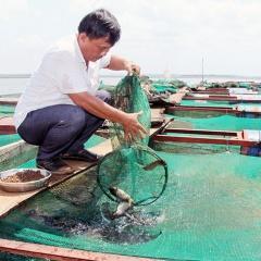 Làm giàu từ nuôi cá trên lòng hồ thủy điện Thác Mơ