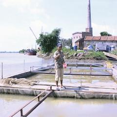 Phát triển nuôi cá lồng ở Yên Phúc