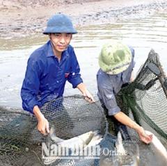 Hướng dẫn kịp thời phòng, chống dịch bệnh cho thủy sản