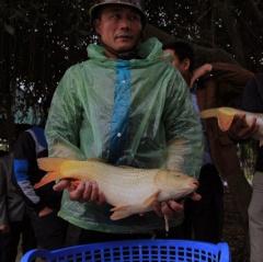 Phòng bệnh và chăm sóc đàn cá khi chuyển mùa