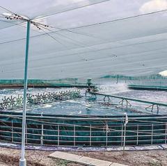 Bạc Liêu: Đầu tư nhiều dự án điện phục vụ nhu cầu nuôi tôm