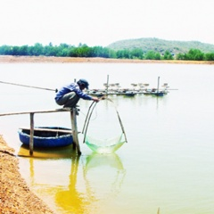 Quảng Điền: 19,4 ha thủy sản nước lợ bị bệnh đốm trắng