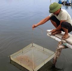 Quỳnh Lưu đẩy nhanh tiến độ thả tôm vụ 2 tránh mùa mưa bão