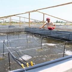 Biện pháp kỹ thuật phòng chống nắng nóng cho tôm cá