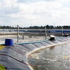 Chính phủ Thái Lan trong nỗ lực bảo vệ nông dân nuôi tôm
