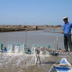 Ninh Bình: Ứng dụng công nghệ sinh học nuôi tôm trong nhà kín