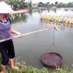 Ninh Bình: Chấm dứt việc nuôi tôm thẻ chân trắng trong vùng nước ngọt