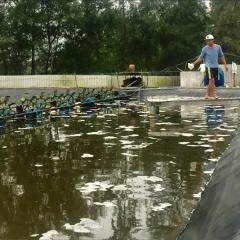 Nuôi tôm Thừa Thiên Huế: Khó áp dụng nuôi tôm công nghệ cao