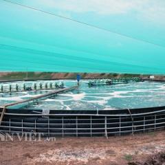 Thăm mô hình nuôi tôm trong hồ tròn hiệu quả bậc nhất đất Bạc Liêu