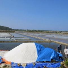 Khuyến khích diêm dân sản xuất muối trải bạt