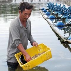 Ninh Hải phát triển nuôi trồng thủy sản theo hướng bền vững
