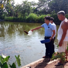 Hiệu quả mô hình ương nuôi cá giống ở Yên Đồng