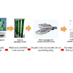 Khái niệm mới về vaccine thực phẩm cho cá