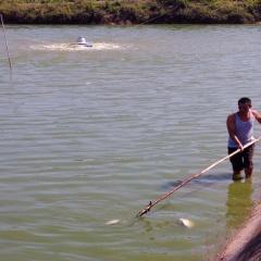 Bắc Giang: Xuất hiện cá chết rải rác do nắng nóng