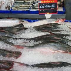 Doanh nghiệp cần kiểm soát chặt chất lượng cá tra xuất sang Trung Quốc
