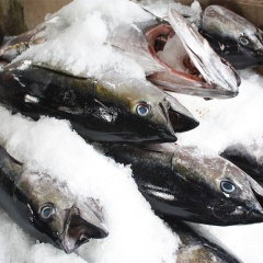 EU cấm nhập khẩu sản phẩm thủy sản Brazil