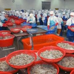 Tăng cường kiểm soát an toàn thực phẩm thủy sản xuất khẩu sang Hàn Quốc