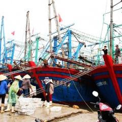 Sau bão, ngư dân Quỳnh Lưu thu nhập khá từ khai thác hải sản