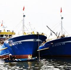 Bà Rịa - Vũng Tàu hướng tới nghề cá bền vững